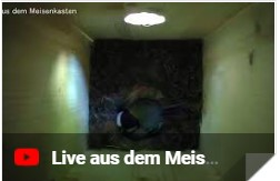 Meisenlive
